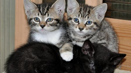 There are more cats and kittens needing homes than ever before