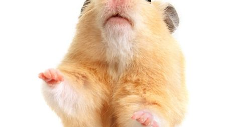 There was an Easter tale about a Painswick family who rather oddly renamed their pet hamster Jesus a