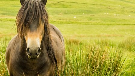 When I was growing up here in the Cotswolds dad decided to give me a wonderful Exmoor pony and I've