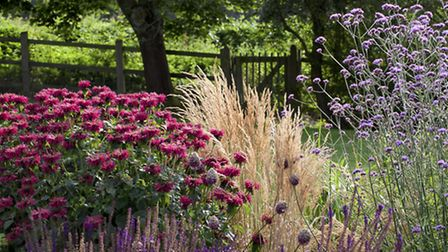 Grasses and perennials such as monarda and salvias in a tapestry meld