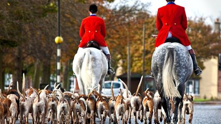 Hunt and hounds
