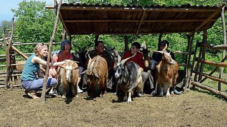 Goats on the farm with travellers. Photo by William Watson