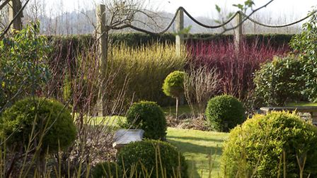 Standard cypress punctuate the rope garden that is hedged with cornus