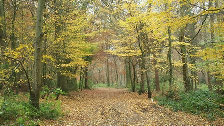 Late autumn in Whippendell Wood
