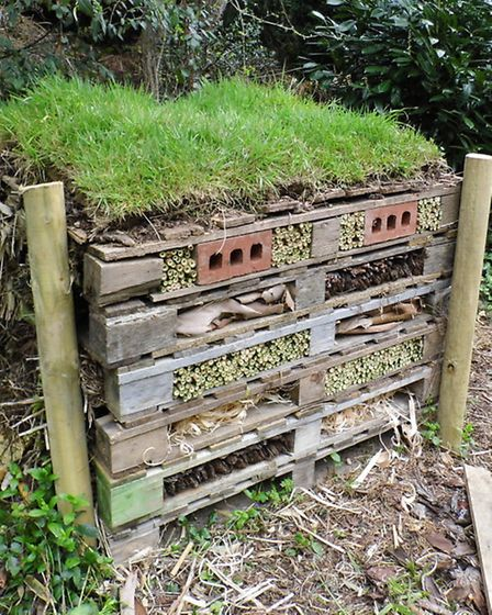 A five star bug hotel
