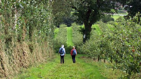 Resized image for March Devon Life walk
