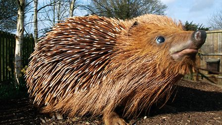 The 7ft hedgehog takes pride of place at the British Wildlife Centre (Photo: Matt Binstead)