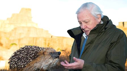 Sir David Attenborough admires the maquette of the hedgehog sculpture (Photo: Pharic Crawford/UKTV)