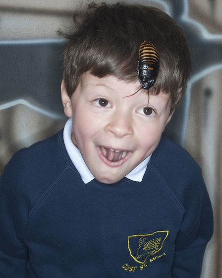 Clyst St Mary Primary School pupil getting close to the Madagascan hissing cockroach at Bugz Unlimit