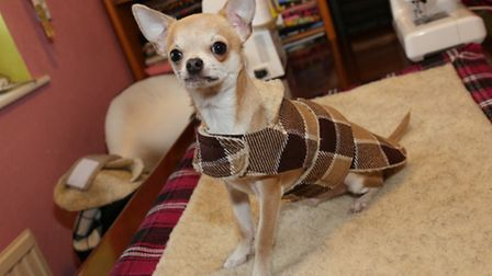 Arlo the dog in the Cheshire collection coat
