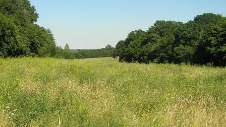 The meadow in summer