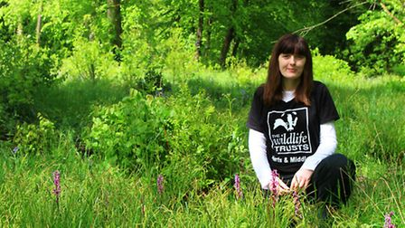 Project officer Ann Favell amidst early purple orchids and bluebells in Monkswood, Stevenage (HMWT)
