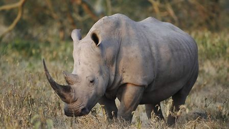 It's Rhino Week at Cotswold Wildlife Park