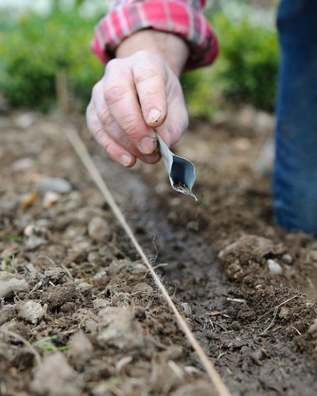 Anything planted at this time of year relies on you for its water until its roots have spread