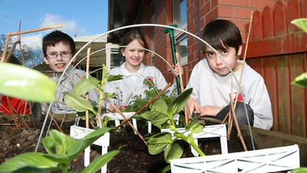 Jacob Wood (9), Rose Menham (8) and Jaime Robinson-Martinez (9) tending the broad beans, peas and on
