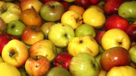 Some of the 100 varieties of apples pressed to create Rosie's Kiss cider