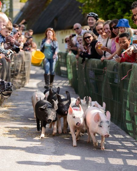 Helen Browning's Organic Pig Racing Day / Photo: Elliott Neep