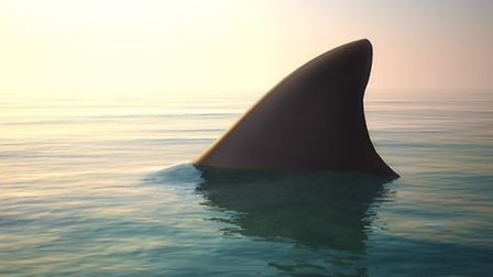 Shark fin above ocean water / Photo: Digital Storm