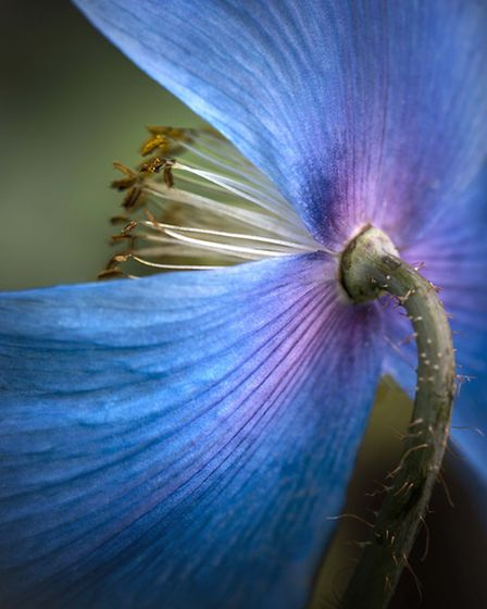 Entry in the seventh International Garden Photographer of the Year competiton 2012.