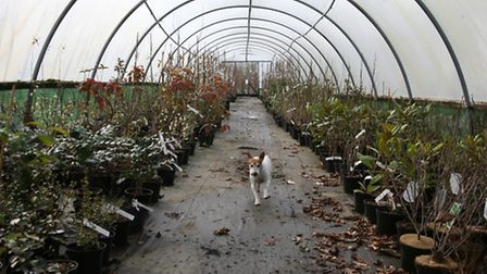 Polly the Jack Russell is a familiar sight alongside Kevin Croucher as he patrols the polytunnels at