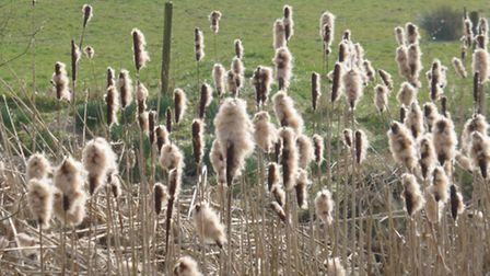 Bull rushes along the route