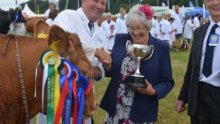 Patrick Greed's Limousin, Champion at Devon County Show in 2013, bred at Columbjohn Farm at Rewe nea