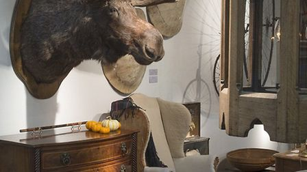 Taxidermy has been making a big comeback lately