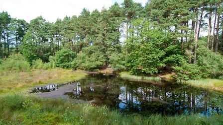 Beneath Delamere's pines lie a myriad of unique acidic pools shaped by the Ice Age - Andrew Walmsley