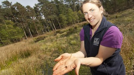 Dr Vicky Nall from Cheshire Wildlife Trust with one of this year's young white-faced darter larvae b