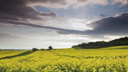Get out for a walk in the Surrey countryside this month (Photo Simon Greig - iStock)