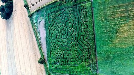 An aerial shot of the sheep-shaped maze