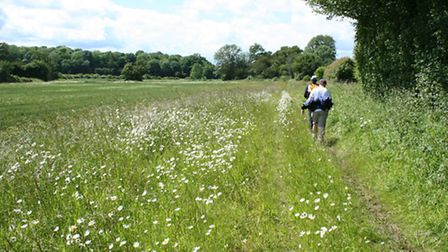 A wide strip of grassland beside a hedge - ideal hunting ground for kestrels and barn owls