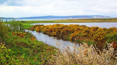Expect to see an array of wildlife at Lymington and Keyhaven Marshes