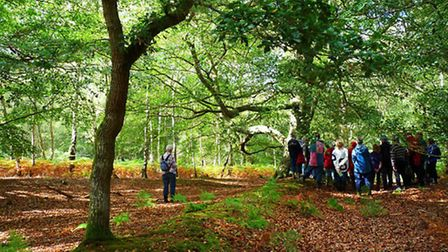 Roydon Woods Nature Reserve is located within the New Forest National Park