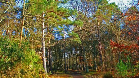 Pamber Forest Nature Reserve encompasses over 200 hectares of woodland