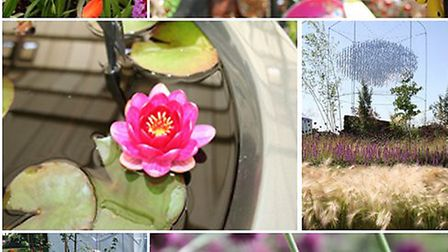 Primula, Ornate display, Water Lily, See the Wind Garden, Element Garden Michael Vinsun, Bee