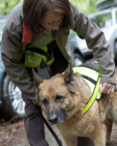 Once her high-vis harness is strapped on by her owner Emma, nine year-old German shepherd Kim knows