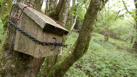 Nestboxes have always been, and remain, a key research tool for wildlife experts tracking the fortun