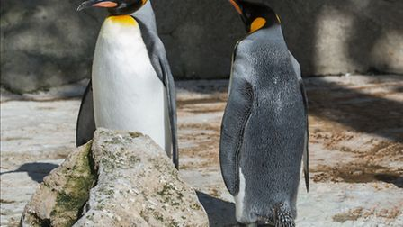 Penguin parents at Birdland Park and Gardens / Photo: BNPS