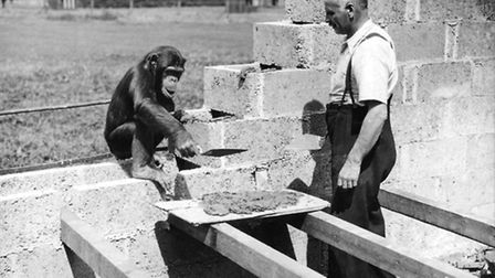 George Mottershead and workmate at Chester Zoo