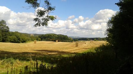 Abinger Roughs, looking towards Reigate Hill, by Surrey Life reader Linda Mount