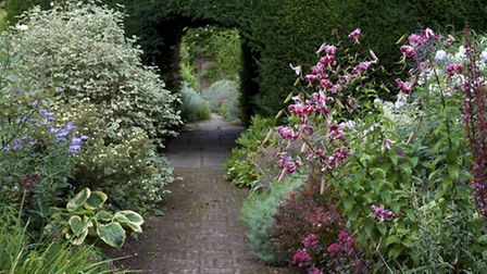 A stand of lilies draws the eye as you stroll the path through the elephant hedge