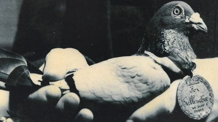 Carrier pigeon 'Navy Blue' earned its medal in 1944 for delivering a vital message from a raiding pa