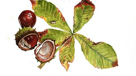 Horse chestnuts are in abundance, while sweet chestnuts roasted make an unmistakably autumnal treat