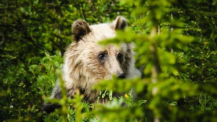 I was wandering around an area populated by bears dressed only in shorts and blood
