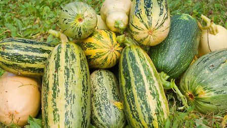 What the health boss-pots fail to mention is that eating marrow is no more appetizing than guzzling