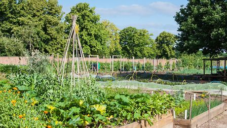 Grace and Flavour community garden in West Horsley (Photo: Bob Holmes)