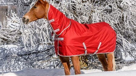 Well-fitting rugs such as this Freedom Turnout from Bucas will ensure your horse stays snug