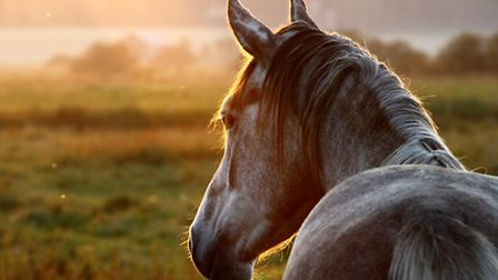 It's said that the equine industry could contribute more to the county's economy than livestock and