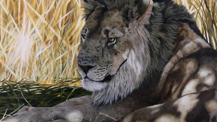 Resting Lion by Emma Bowring